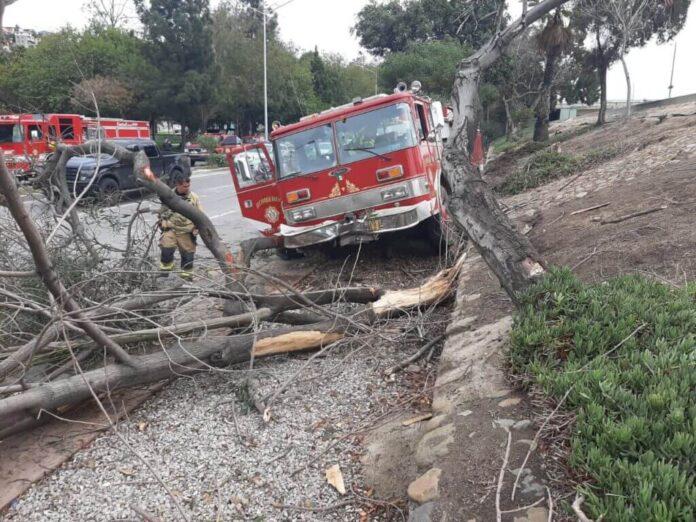 Bombera se estrelló contra árboles